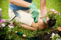 Woman planting small plants